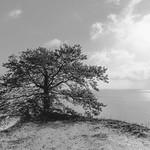 Baum am Abgrund thumbnail