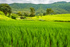 bhor13 (1 of 1) (rolixir) Tags: bhor greenary landscape natgeo
