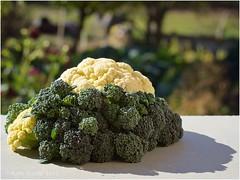 Chou-fleur et brocolis de la Toussaint