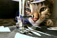 THE SEWING CAT (Yanily66) Tags: cat sewing machine animal feline kitty lighting blue light tabby cute diy crafts