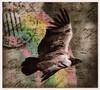 Fly fly (Swissrock-II) Tags: contest challenge photoshop photomanipulation photoshopart pixlr lightroom frame eagle october 2017 condor