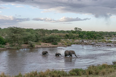 African Safari. Crossing the stream. (Lena and Igor) Tags: safari travel africa tanzania serengeti nationalpark animals mammals elephants river stream crossing baby clouds mother landscape scenic dslr dx nikon d5300 nikkor 18300 cropsensor