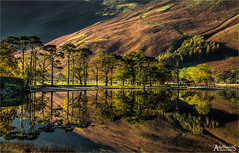 Autumn morning on Buttermere (explored) (AdelheidS Photography) Tags: adelheidsphotography adelheidsmitt adelheidspictures lakedistrict lake landscape england engeland greatbritain britain pines buttermere reflection trees lakeland unitedkingdom autumn fall forest mountain scenic heather