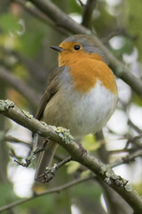 """robin1 • <a style=""""font-size:0.8em;"""" href=""""http://www.flickr.com/photos/157241634@N04/24197787648/"""" target=""""_blank"""">View on Flickr</a>"""