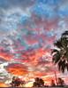 Dawn Halloween 2017 (splinx1) Tags: dawn sunrise cloud blue pink orange palm handheld hdr chdk photomatixpro canonart canonpowershotelph330hs california halloween
