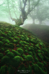 Bubble bobble forest (Mimadeo) Tags: forest magic moss bubbles bubble green tree fantasy fog mystery wood morning spring misty grass natural magical mysterious foggy enchanted surreal fairytale dreamy nature landscape light mist