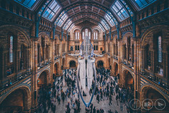 And Nobody Spotted The Whale... (Adrian Court LRPS) Tags: arches architecture aurorahdr building ceiling hdr hintzehall ironwork london motion museum naturalhistorymuseum people skeleton southkensington stainedglass steps stone whale windows