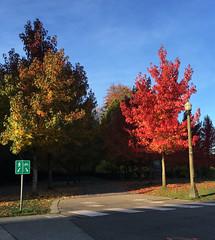 Autumn Foot / Bike Paths (Clara Johnson) Tags: vancouver bc stanleypark lostlagoon