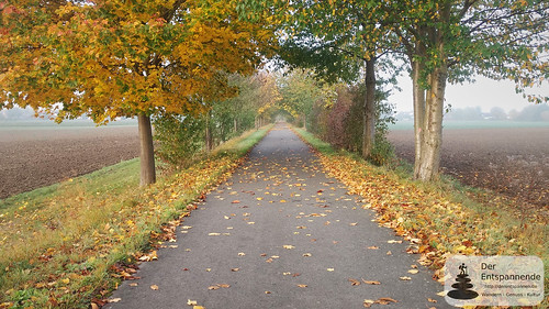 Radweg Mommenheim - Selzen