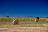 Hay Bales, Victoria Australia (Explore) (les.butcher) Tags: hay bales victoria australia patchewollock hopetoun mallee