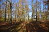 allgerheiligen... (joachim.d.) Tags: herbstwald hühnerhof badsobernheim wald herbst autumn november 01112017 licht schatten lichtundschatten blätter herbstfarben waldboden