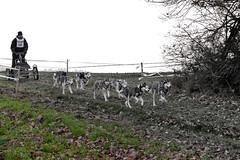 Schlittenhunderennen_387
