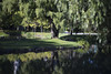 樹 (Zunten) Tags: tree 木 樹 water 水 pond 池 mirror 鏡 nakajimapark 中島公園 sapporo 札幌 hokkaido 北海道 japan 日本 sony α7r ilce7r carl zeiss planar 1485 t mmg planar1485 cy