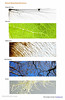 PATTERNS branches and veins.pages (DaveHuth) Tags: branching combo patterns veins