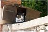 living in the mailbox (HP032940) (Hetwie) Tags: rivier rivierkreeft stadje water kat lobster cat mailbox brievenbus nature river village auvergne lavaudieu senoire hauteloire frankrijk fr