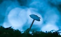 Dans les bois (2) (FLL087) Tags: insecte bokeh bois forêt champignon limousin macro nouvelleaquitaine nature extérieur automne saison