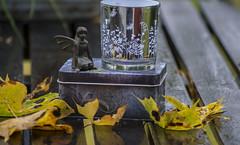 "Mitt bidrag till fotosöndag tema ""Nobel"" (My Photolifestyle) Tags: fotosondag fotosöndag foto hösttema autumn trädgårdsälvor jacaranda ironfairies fairies lyktabarncancerfonden majascottage majaslyktor fs171008"