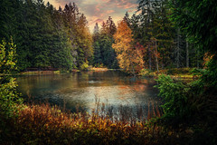 Etang de la Gruère (Chrisnaton) Tags: switzerland jura lake nature sunset eveningmood eveningsky etangdelagruère moor spruces