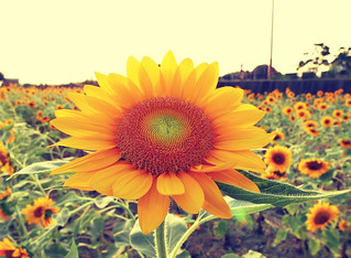 彰化花卉 Changhua Flowers - 5