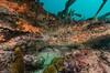 DSC_2775 (bajo_el_mar) Tags: 2017 asturias cantábrico lastres underwater fotosub
