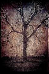 Tree of dreams - bad dreams (Barb Henry) Tags: backgrounds surreal weird wild tree dreams perish death creepy scary halloween shadows crawly nightmare dream alone fright