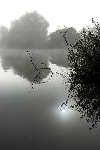 Meinerswijk Mist