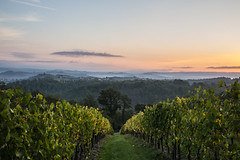 A morning in Tuscany... [Explore 16/10/17] (Schmu.online) Tags: italy italien tuscany toskana autumn herbst vineyards weinberge sunrise sonnenaufgang landscape landschaft fog foggy nebel neblig nature natur rural ländlich hiking wandern sky himmel hills hügel colours farben atmosphere atmosphäre sangimignano canon6d canon