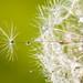 Nikon D300s Drops & Flowers