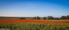Poppy Field (Danny Gibson) Tags: landscape landscapes field poppyfield poppies norfolk northnorfolk brancaster canon7d canonef1018mm