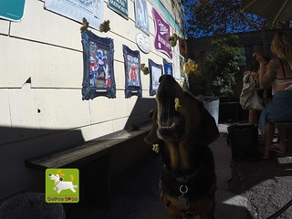 @coconut_cam GoPro dogs