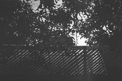 fortepan-100-2 (Vasily Ledovsky) Tags: 35mm expired film forte bw fortepan 100 blackwhite voigtlander canon bessat ltm 50mm 18 monochrome