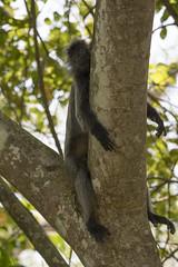 DSC_5528 (Almixnuts) Tags: kualaselangor nature naturepark kualaselangornaturepark