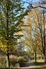 High Park (hogtown_blues) Tags: toronto ontario canada highpark trees foliage autumn fall 2017