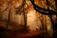 Visioni autunnali (mariateresa toledo) Tags: bosco woods autunno autumn nebbia fog oro gold sony valcolla cimadera svizzera cantonticino mariateresatoledo
