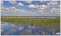 Lac d' Hourtin (capo.jeanclaude) Tags: tournefeuille hautegaronne france capojeanclaude hourtin lac