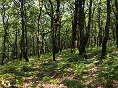 A wonderful life without a path_IMG_1364c (AchillWandering) Tags: aetoloacarnania forest mountain greece aitoloakarnania nature dream life naturephotography