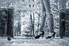 Bérengère (8) - Gap - Octobre 2017 (Tophy05) Tags: canon eos 6d eos6d canon70200f4 paca hautesalpes gap charance modèle bérengère shooting extérieur outside arbre tree feuille leaf feuillage foliage talonshauts highheels chaussures shoes escarpin jambe leg jeandéchiré rippedjean skancheli noiretblanc blackandwhite monochrome