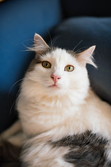 300 (Garen M.) Tags: dogs chip jojo testshots nikond850 cat chicklet maverick nikkor35mmf14 buttercup