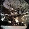sasebo november (johngpt) Tags: shadows appleiphone5 lantern ishidōrō sasebojapanesegarden wall tree trees lowylensctypeplatefilmnoflash abqbotanicgardens places hipstamatic albuquerque newmexico unitedstates us wallwednesday hww