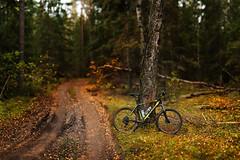 Cube (aburlakov) Tags: forest road bike mtb mud dirt autumn fall brenizer cube mountain attention