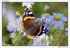 Dynax5_T90_S85_KodakCP200_15_s (mikre_me) Tags: dyxum dyxumonethird onethird film filmchallenge dynax5 kodakcolorplus200 tamron9028 butterfly