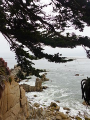 20160817 Californie Pacific Grove - (54) (anhndee) Tags: usa californie california pacificgrove