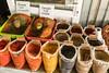 IMG_2460 (Ninara) Tags: baikonur kazakhstan kyzylorda казакстан кызылорда рынок spices