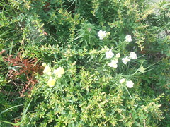 448 (en-ri) Tags: fiorellini giallo cespuglio sony sonysti verde