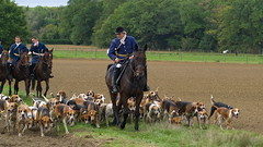 Vénerie (Phil du Valois) Tags: vénerie veneur meute chasse forêt domaniale compiègne courre