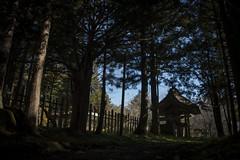 0337 (Shota Fukuda) Tags: 日本 japan 岩手県 遠野 神社 shintoshrine 早池峰神社