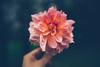 A flower a day-keeps sadness away (--StadtKind--) Tags: stadtkind zeisskanns zeiss sonyfe1435za sonyilce7m2 alphaddicted sonyalpha bokeh bokehlicious depthoffield doflicious dof pflanze blume blüte flores fleur flower