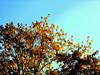Árvore no Lis (ashera08) Tags: leiria portugal ashera flickr fotografia tree nikon photos picasa olhares