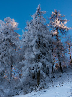 Winter Trees-00478