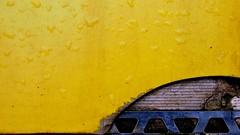 Minimal - Broken Yellow (Visual Stripes) Tags: minimal yellow texture tile droplets lines metal